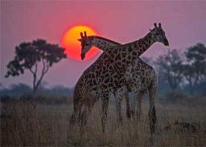 Okavango: River of Dreams – Episode 3: Inferno