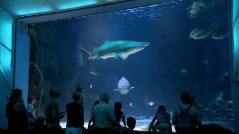 Sharks and other aquatic life at the Newport Aquarium with visitors in the foreground looking on