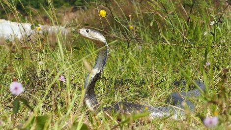 Snake in a grassy field