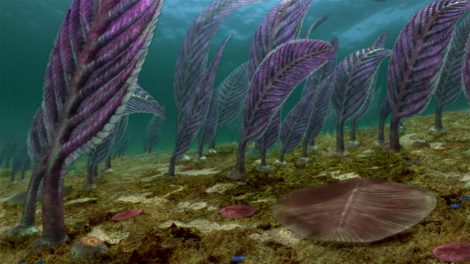 Plant life underneath in Austrailia