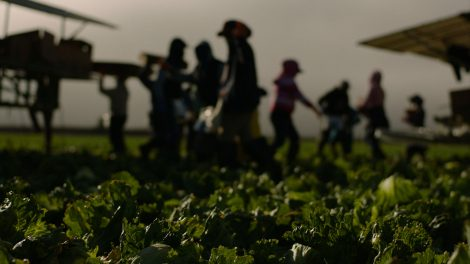 Workers at the Field Fresh Farms in Gonzales, CA.