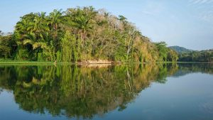 Forested shores of the Chagres River in Panama