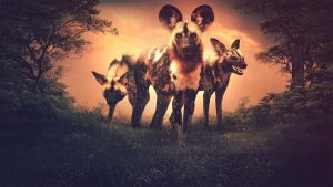 Stylized photo of three wild dogs