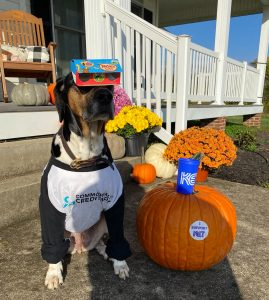 """A dog wearing a Commonwealth Credit Union t-shirt wearing Nature Cat and PBS Kids branded cardboard goggles next to a pumpkin with an """"I Support KET"""" sticker on it."""