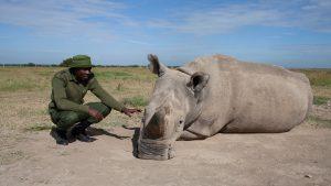 James Mwenda with Northern White Rhino, Kenya