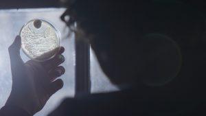 Silhouette of David Olusoga holding up petri dish.