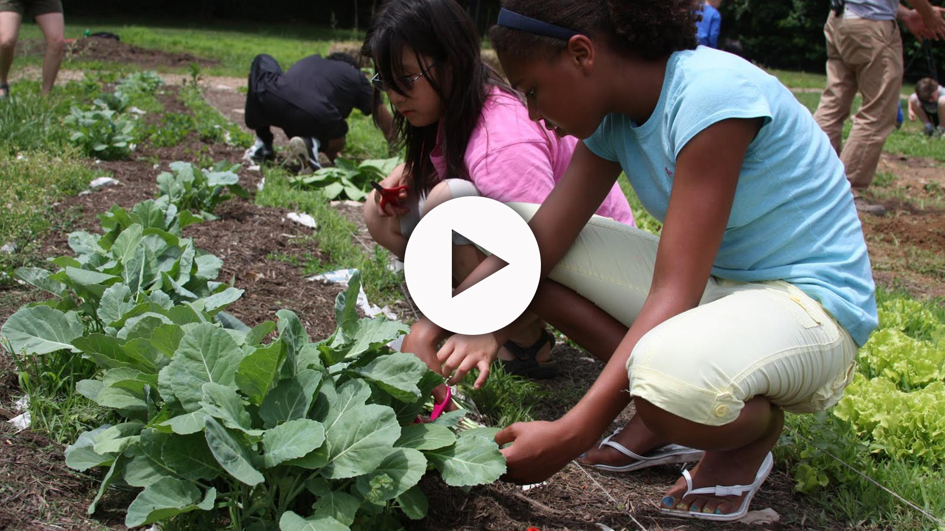 Several kids squatting down working with plants in a garden.