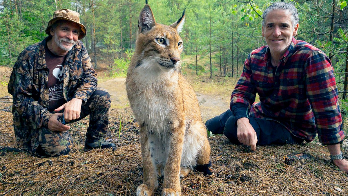 Two men sitting on the forest floor just behind and to either side of a lynx.