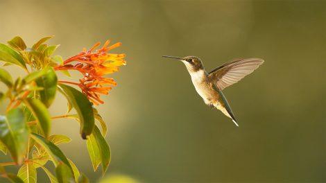 A hummingbird hovering near a flower