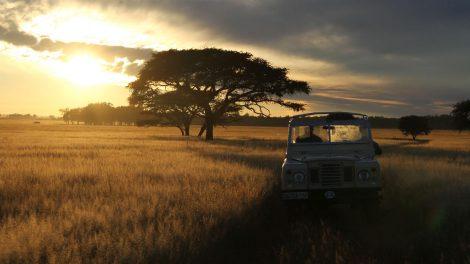 A jeep driving through the Savannah at sunset