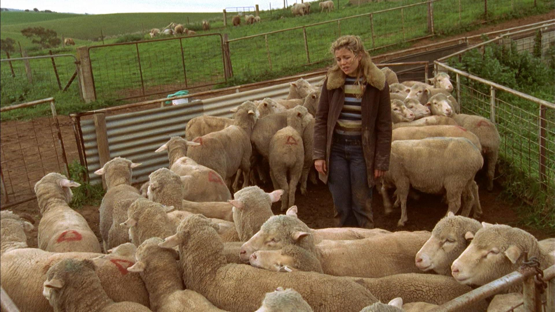 A woman standing in a pen, surrounded by sheep, looking defeated.
