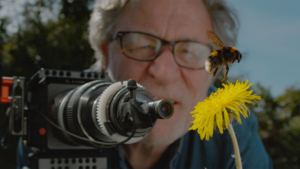 A man with a video camera set up to record close-up video of small subjects is in the background. The camera is pointed at a bee on a dandelion flower in the foreground.